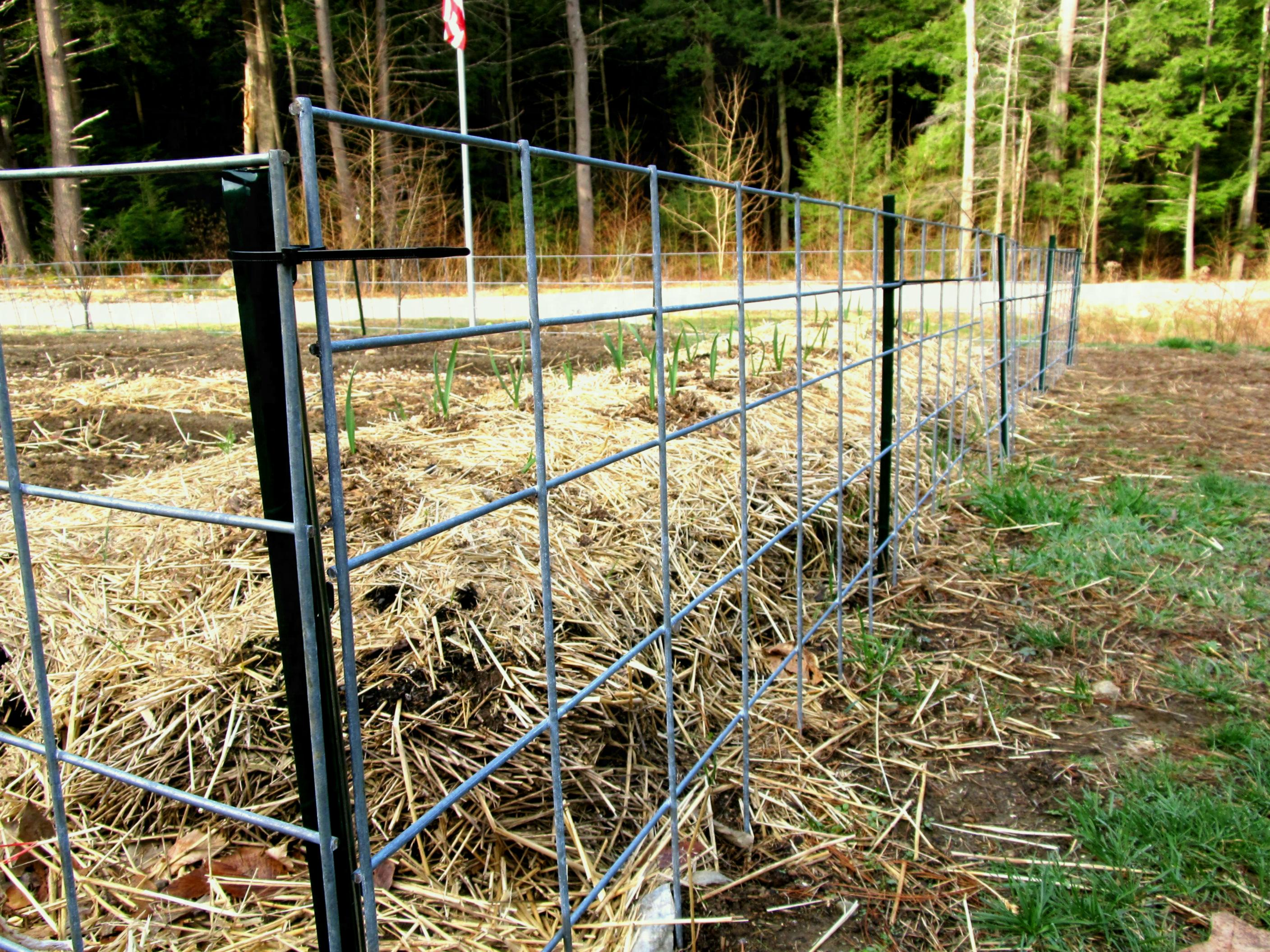 cattle panels fencing